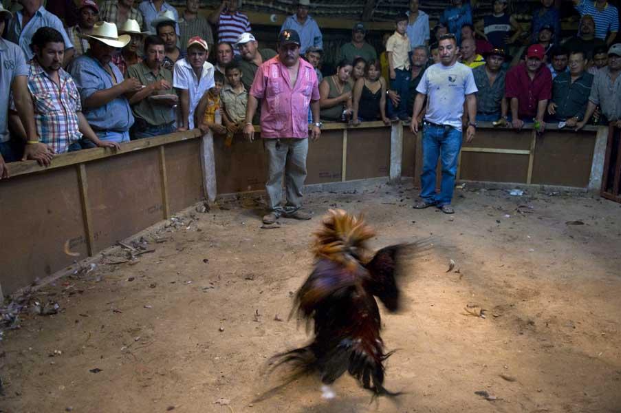 http://www.pablodelano.com/files/gimgs/13_hondurasweb27.jpg