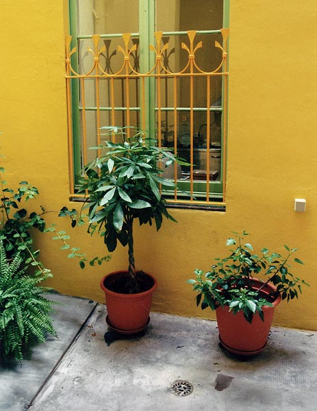 http://www.pablodelano.com/files/gimgs/37_patio.jpg